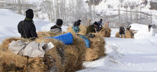 Burası Hakkari! Karlı dağlarda kızaklarla ot taşıyorlar galerisi resim 1