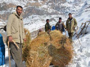 Burası Hakkari! Karlı dağlarda kızaklarla ot taşıyorlar
