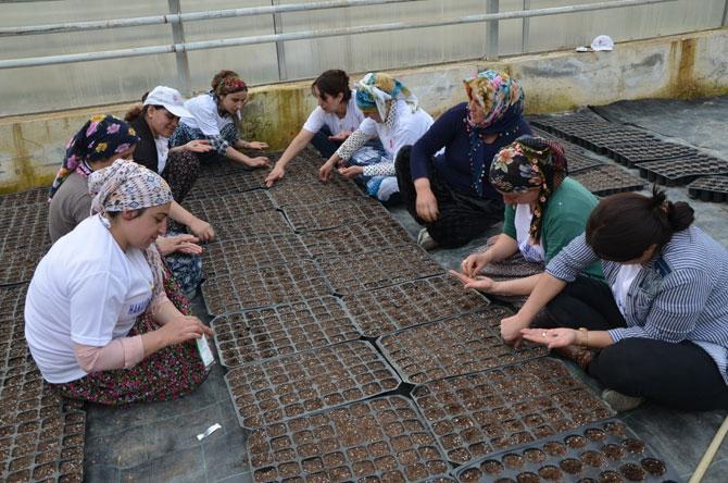Hakkarili kadın çiftçiler toprağa hayat veriyor galerisi resim 1