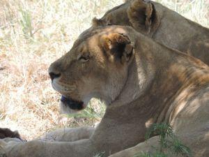 Hakkari dağcıları Afrika safari turuna çıktılar