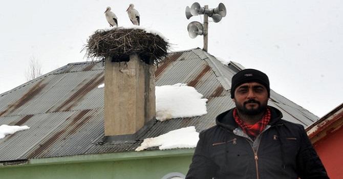 Yüksekova'da Göç edemeyen leyleklere köylüler bakıyor