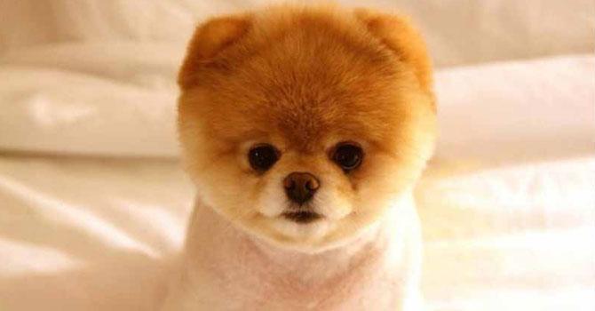 'Dünyanın en sevimli köpeği' öldü