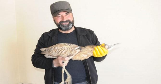 Yüksekova'da Nesli Tükenen Balaban Kuşu Bulundu