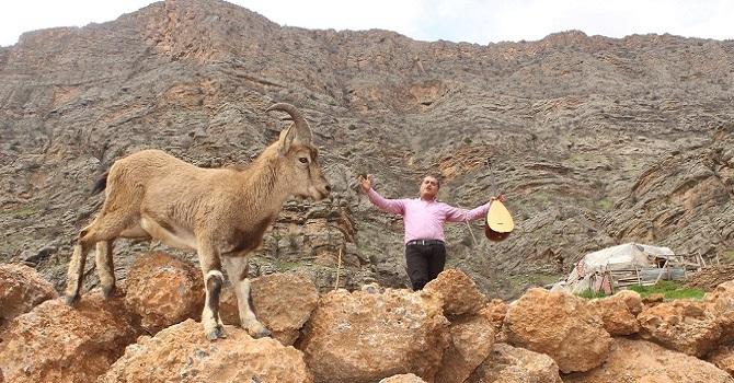 Hakkari'de Dağ keçisi, klipte oynadı