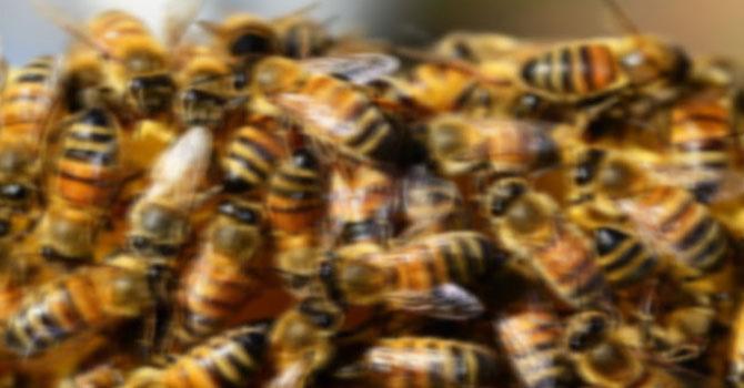 Tunceli'de arı dehşeti: 1 ölü, 3 yaralı