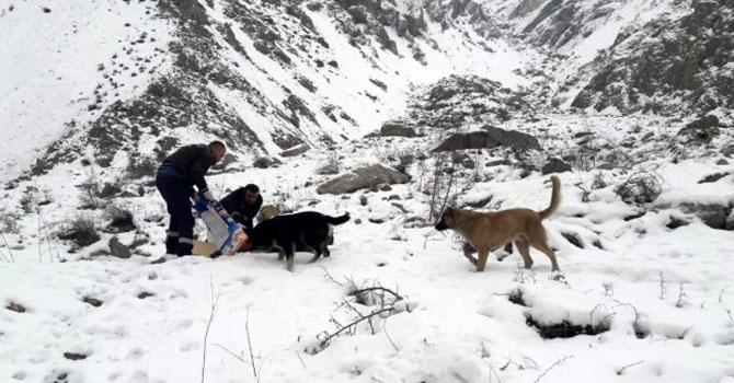Hakkari'de hayvanlar için yiyecek bırakıldı