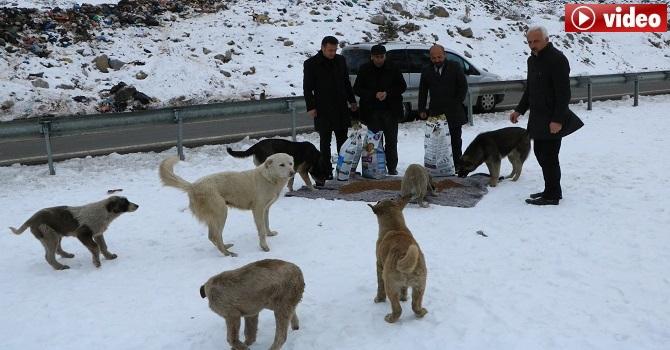 Hakkari Muhtarlar Derneği sokak köpeklerini unutmadı