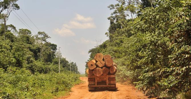 WWF: Korona döneminde orman katliamı yüzde 150 arttı