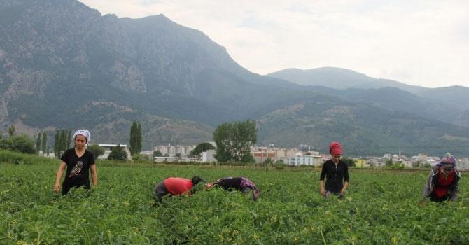 Tarım işçileri güvence istiyor