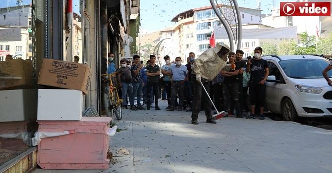 Hakkari'de çarşı merkezini arılar bastı