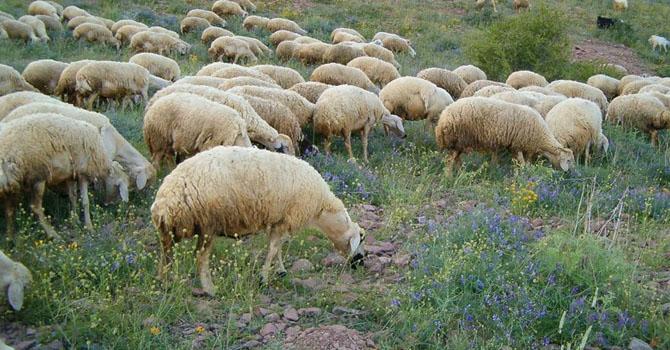 Çobanlarla çiftçiler arasında çatışma: 37 kişi hayatını kaybetti