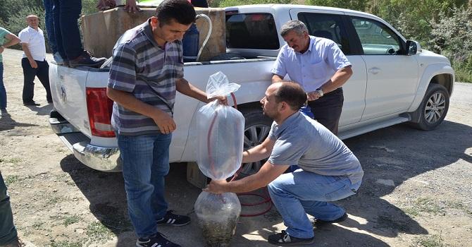 Hakkari'de Sülük Göletine 15 Bin Sazan Bırakıldı