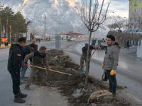 Hakkari'yi Yeşillendirme çalışmaları devam ediyor