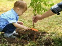 Ağaçları kıralım! Abdurrahman Aşkan yazdı...