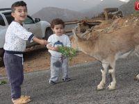 Çukurca'da Köye İnen Dağ Keçilerine İlgi