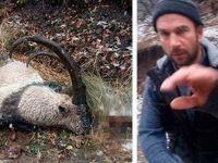 Nesli tükenmekte olan dağ keçisini öldürdüler