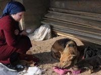 Yüksekova'da yaralı köpek ve yavrusuna vatandaş sahip çıktı