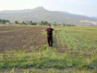 Yüksekova'nın Aksu köyünde çekirge istilası