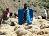 Hakkari'de Üniversite mezunu genç 1500 koyuna çobanlık yapıyor