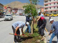 Hakkari Belediyesi'nden ağaçlandırma çalışması