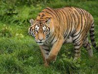 Malezya'da kaçak hayvan avcılarını avlama talimatı