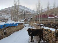 Kayseri'de yola çıkan ineğe trafik cezası kesildi
