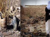 Kürtlere ait toplu mezar bulundu