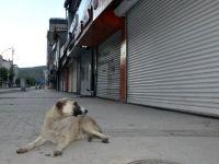 Yüksekova'da sokaklar sessiz