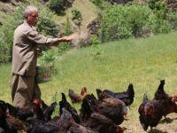 Köyüne dönüp tavuk yetiştiriciliği yapıyor