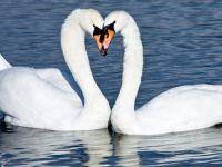 Uzaktaki Sevgiliye özlem! Rıza Tekin yazdı...