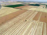 'Arpa ve buğdaydaki verim umut verici'