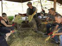 3 dönümlük tarlada yerel tohum mücadelesi