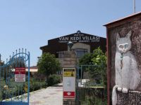Van Kedilerinin Villa Keyfi
