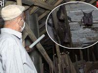 Hakkari'de evin çatısına yuva yaptılar... Binadakileri korku sardı!