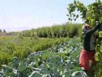 İsteyen organik ürünleri tarladan kendisi topluyor