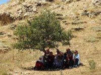 Bir Kitap Bir Ağaç: Abdurrahman Aşkan yazdı