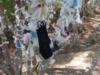 Zeus Altarı'nda 'dilek ağaçları' tıbbi maskelerle doldu