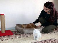 Yüksekovalı Mizgin'den, sokak hayvanları için yardım kampanyası