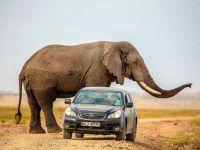 Hız yapan araçlar anne fili ürkütünce ortaya çarpıcı görüntüler çıktı