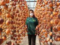 40 kilo ile başladı şimdi yıllık 50 ton cennet elmasını kurutup satıyor