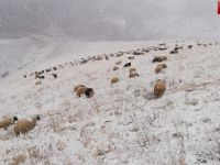 Hakkari'de Koyunları ile mahsur kalan Çoban yardım bekliyor