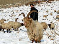 Hakkari'de Erken yağan kar, besicileri hazırlıksız yakaladı