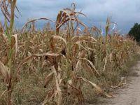 Çiftçiyi pandemiden sonra şimdi de kuraklık vurdu