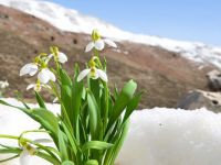Hoşgelmişşin İlkbahar Rıza Tekin yazdı...