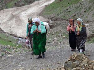 Hakkari'de Koyunlar yaylaya, pancarcılar dağa çıkamıyor